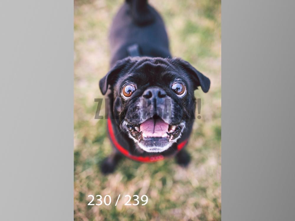 2.20 Dogs-230.jpg