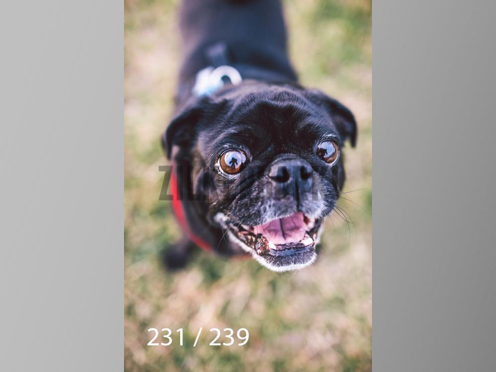 2.20 Dogs-231.jpg