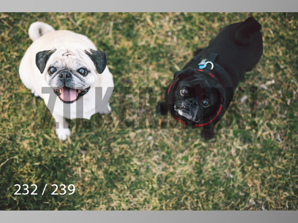 2.20 Dogs-232.jpg