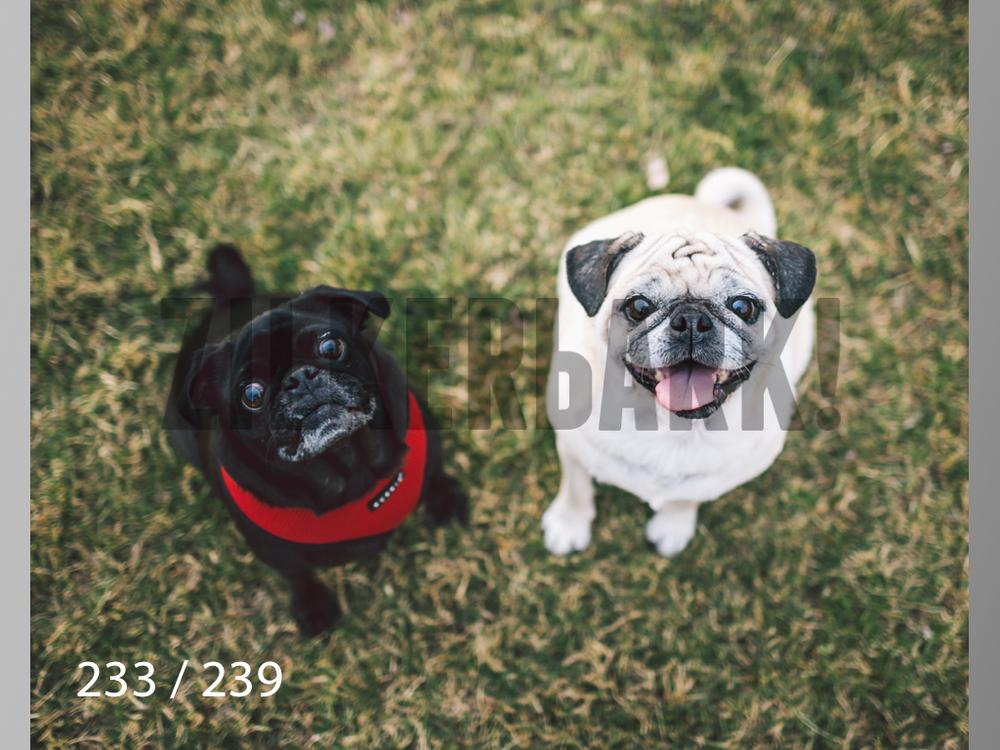 2.20 Dogs-233.jpg