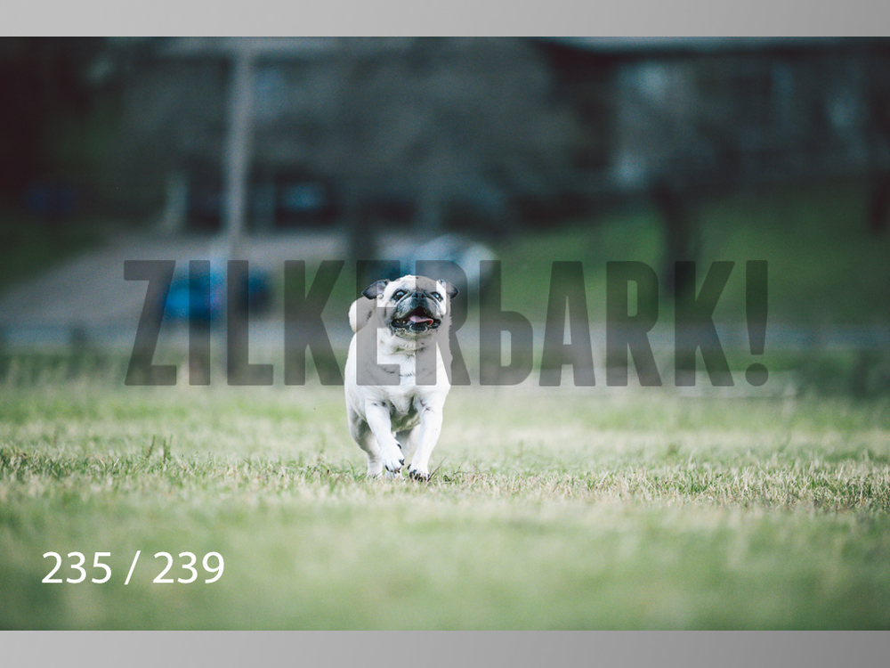 2.20 Dogs-235.jpg