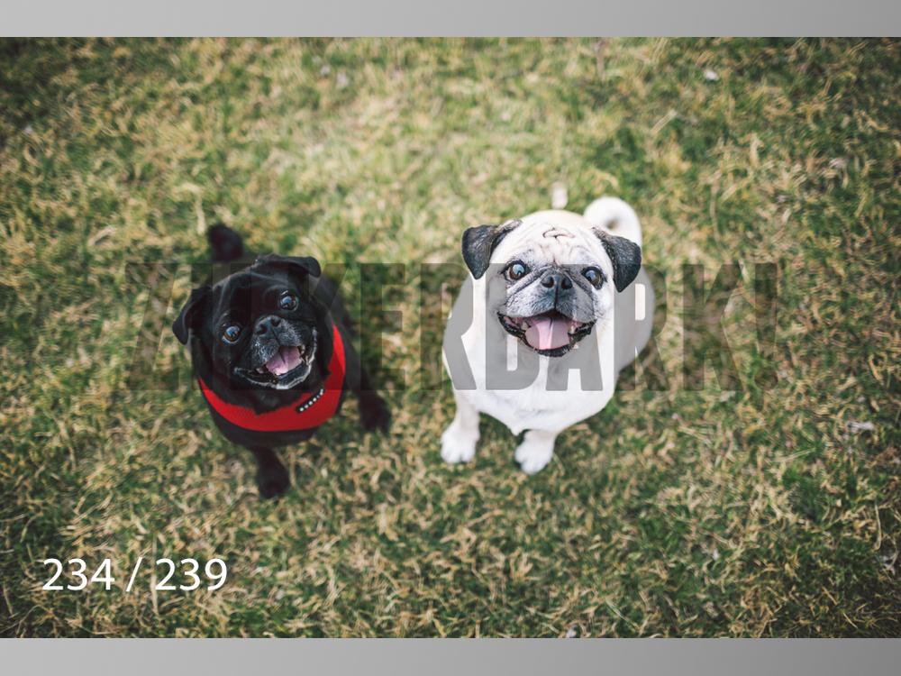 2.20 Dogs-234.jpg