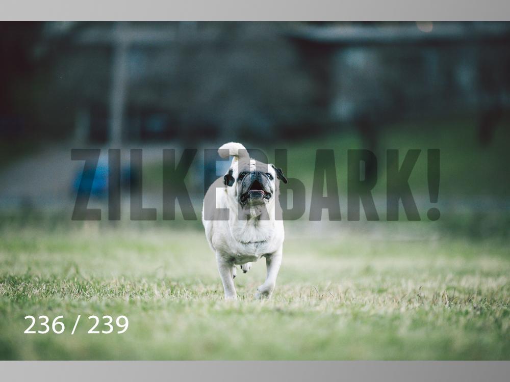 2.20 Dogs-236.jpg