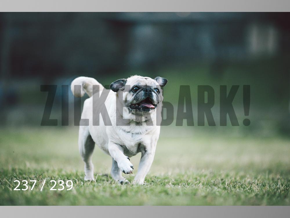 2.20 Dogs-237.jpg