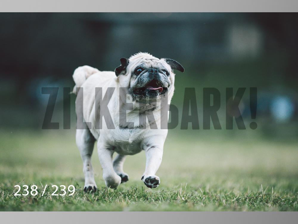 2.20 Dogs-238.jpg
