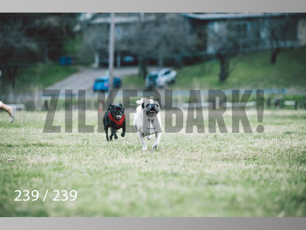 2.20 Dogs-239.jpg