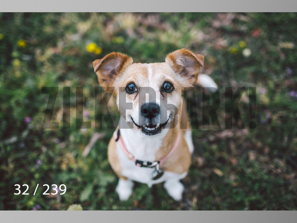2.20 Dogs-032.jpg