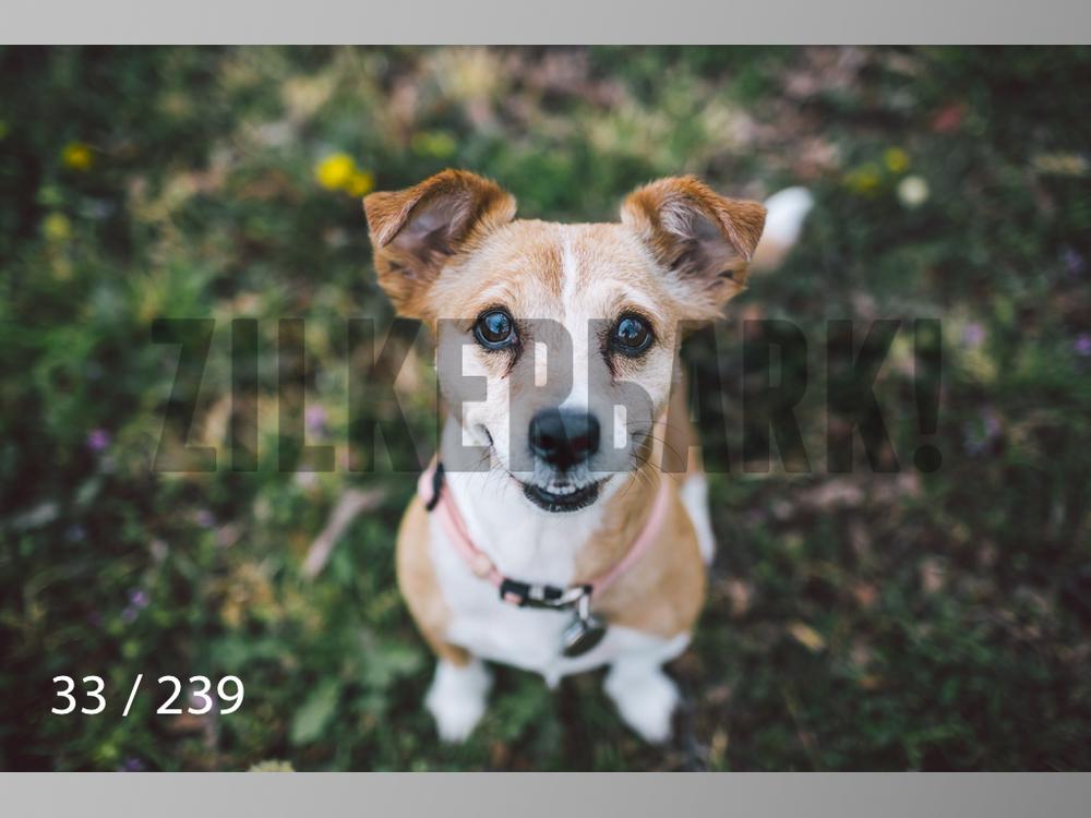 2.20 Dogs-033.jpg