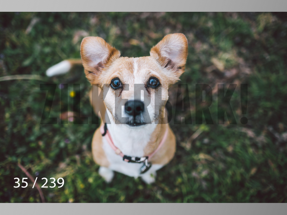 2.20 Dogs-035.jpg