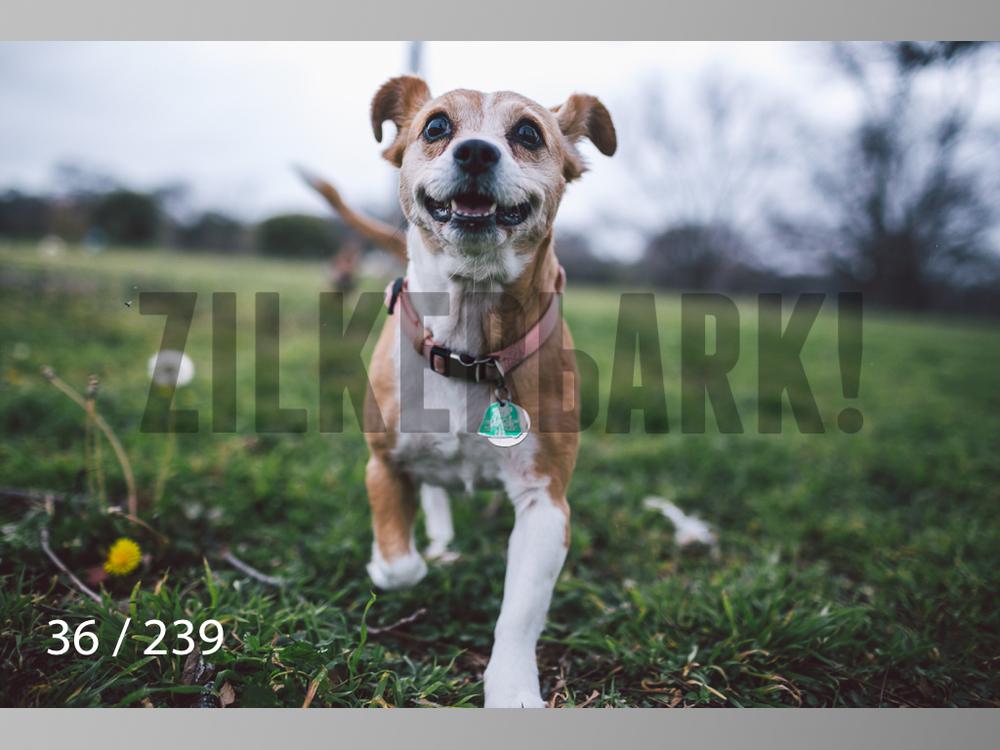 2.20 Dogs-036.jpg