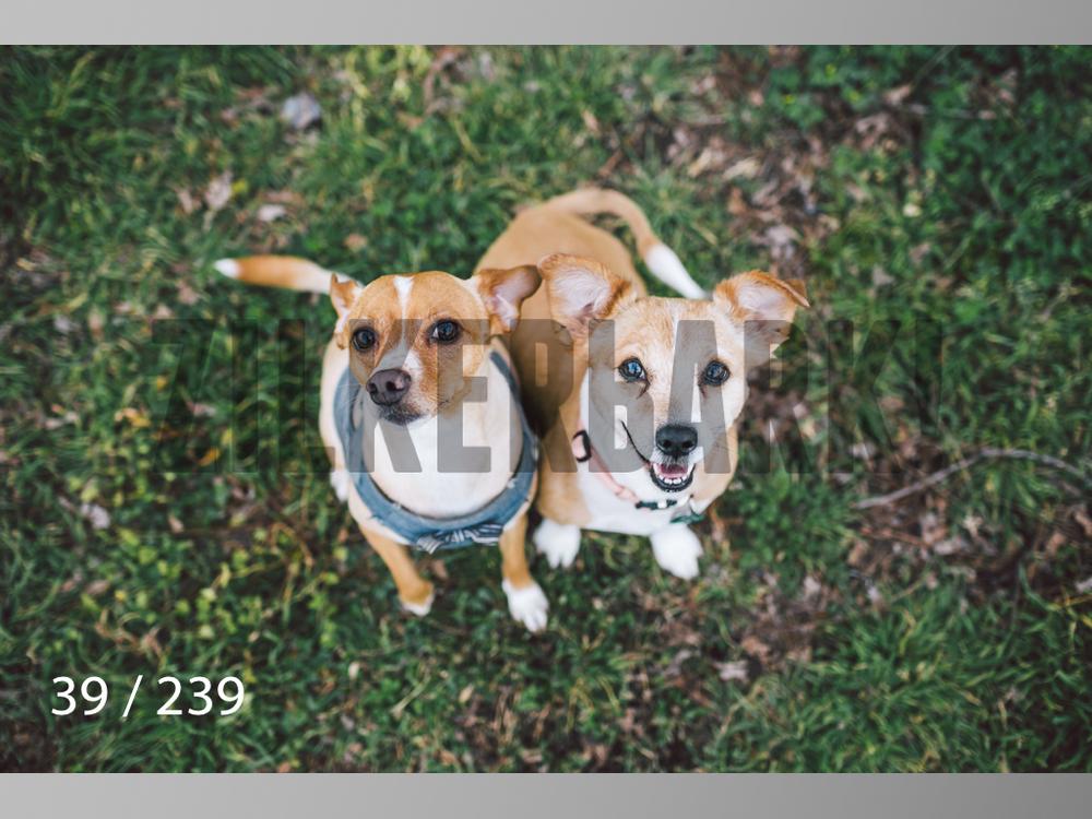 2.20 Dogs-039.jpg
