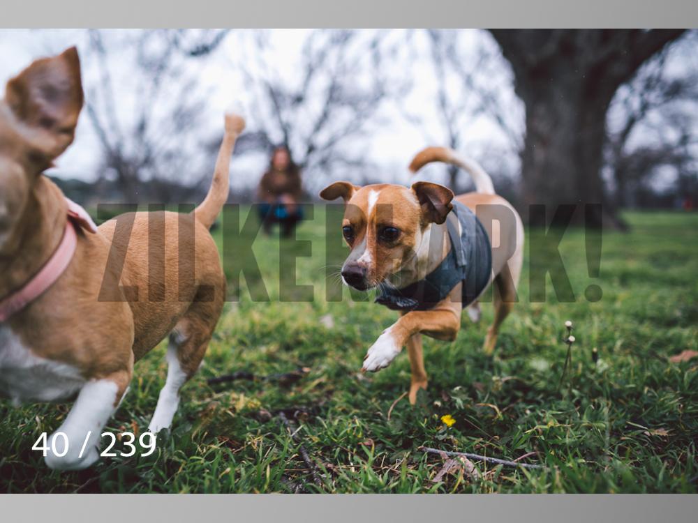 2.20 Dogs-040.jpg