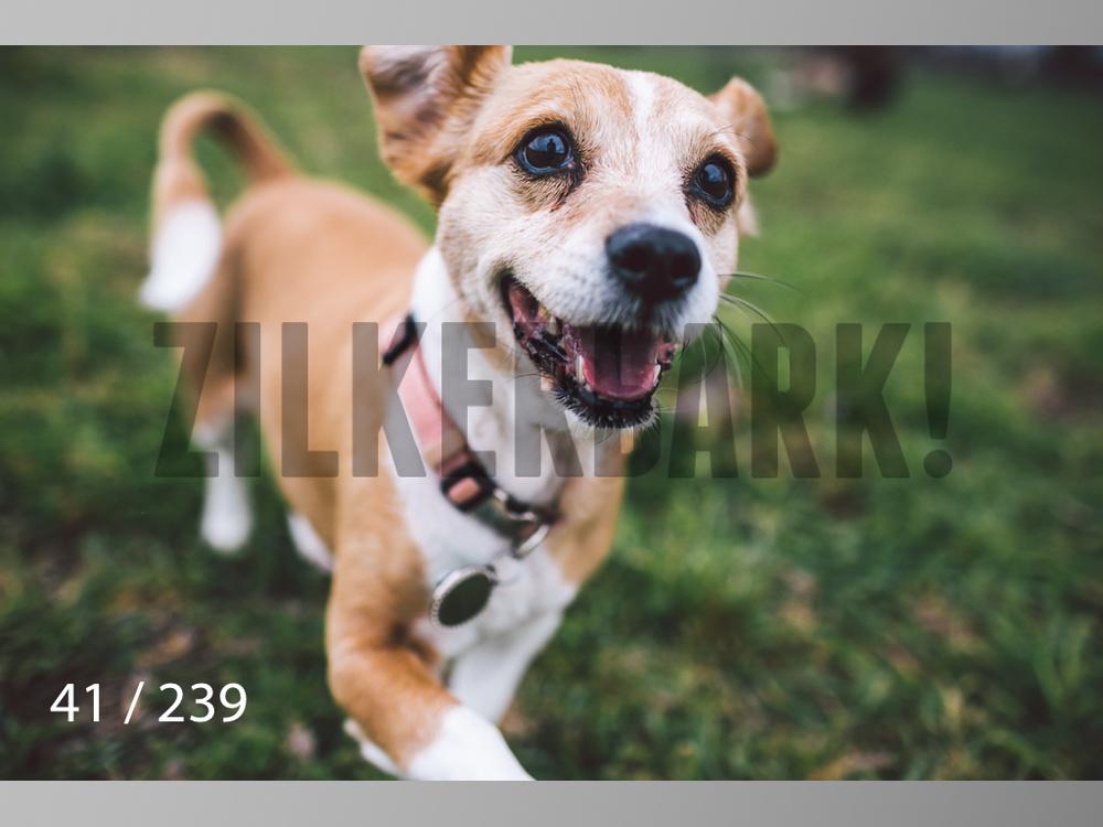 2.20 Dogs-041.jpg