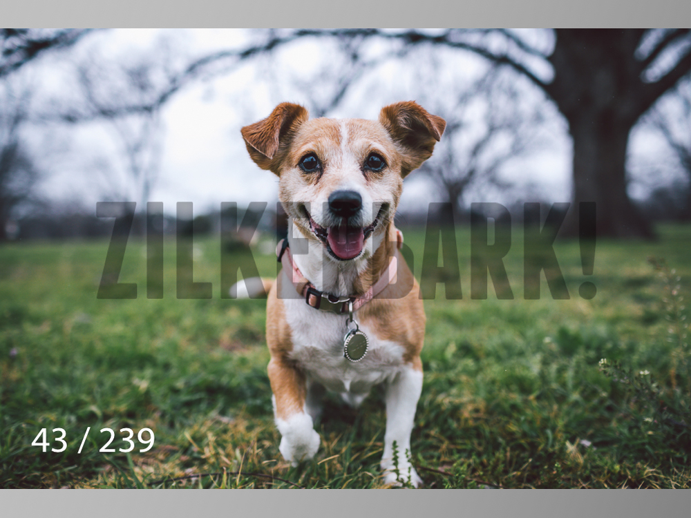 2.20 Dogs-043.jpg