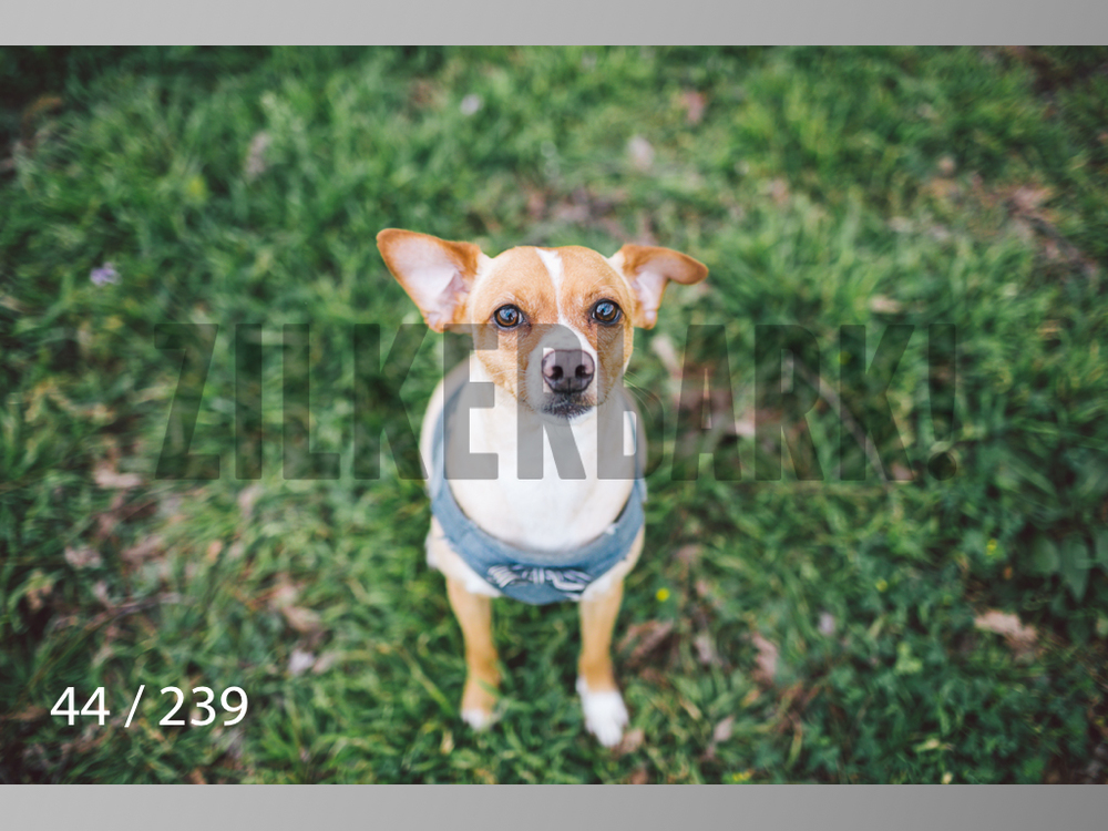 2.20 Dogs-044.jpg