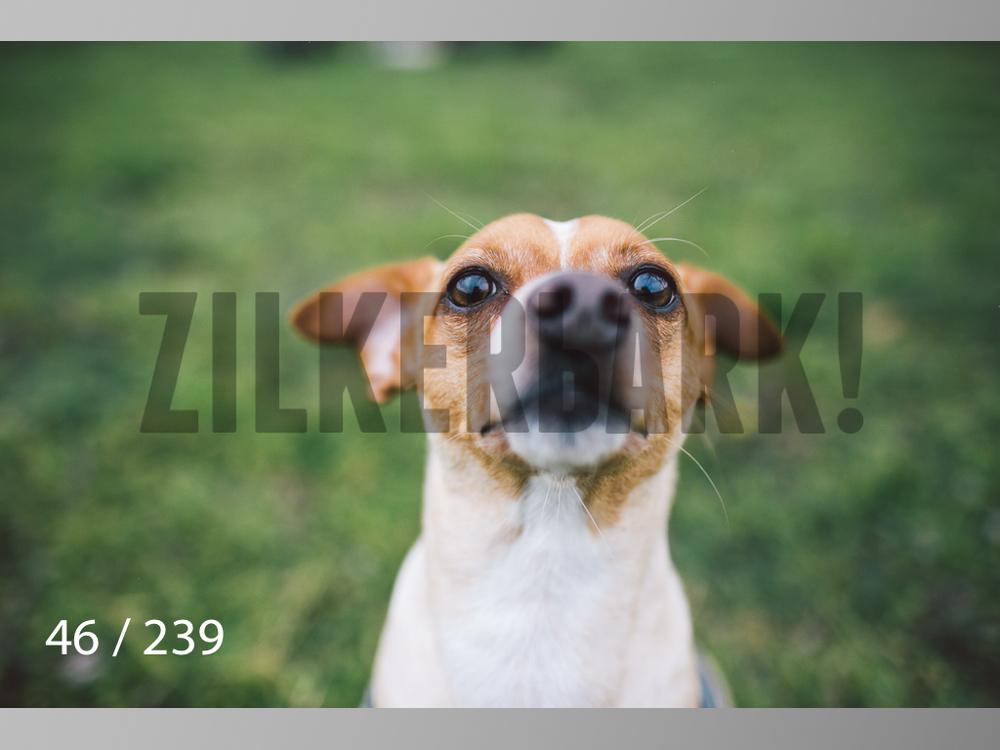 2.20 Dogs-046.jpg