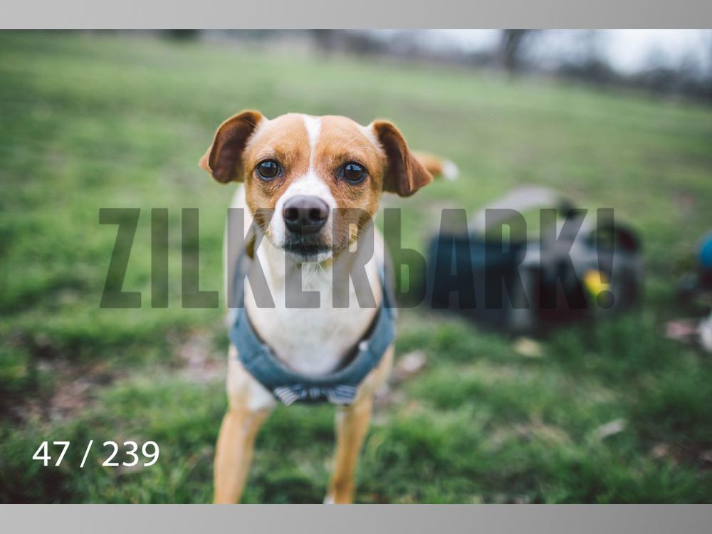 2.20 Dogs-047.jpg