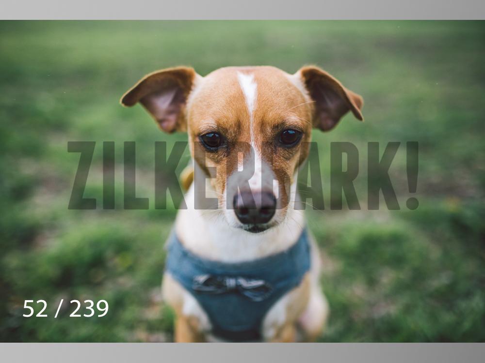 2.20 Dogs-052.jpg