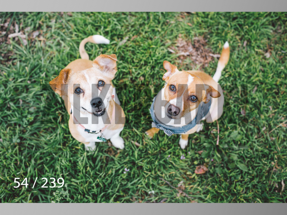 2.20 Dogs-054.jpg