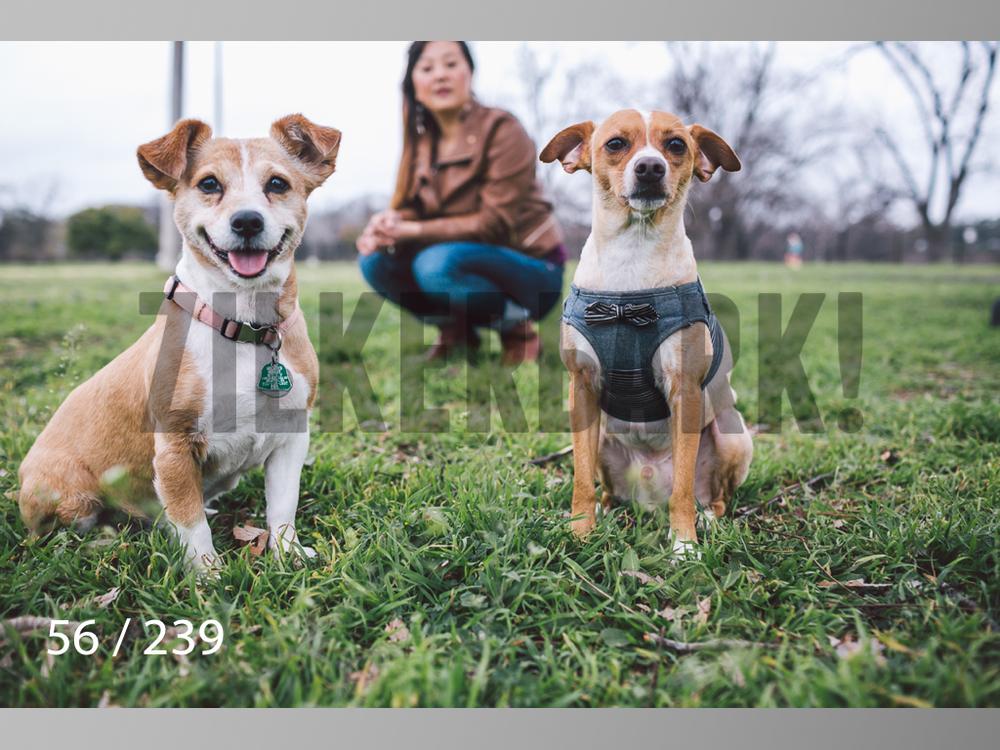 2.20 Dogs-056.jpg
