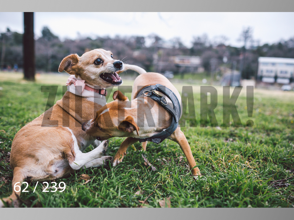 2.20 Dogs-062.jpg