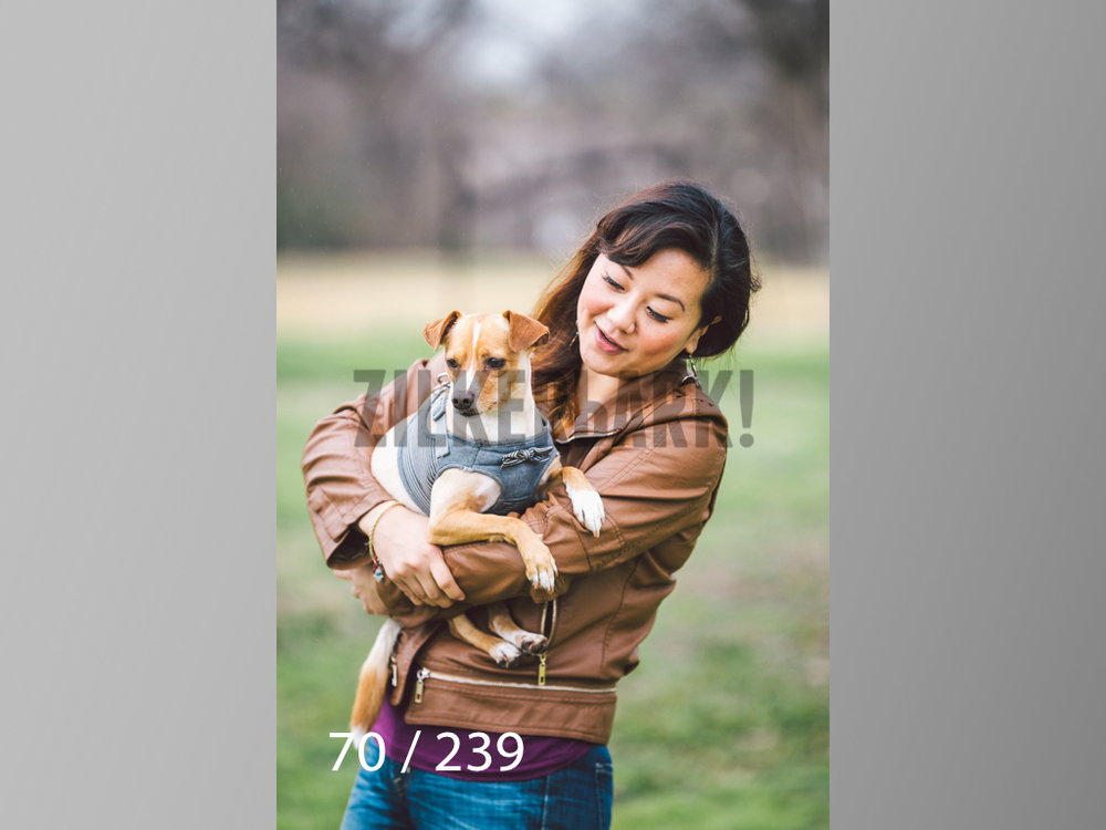 2.20 Dogs-070.jpg