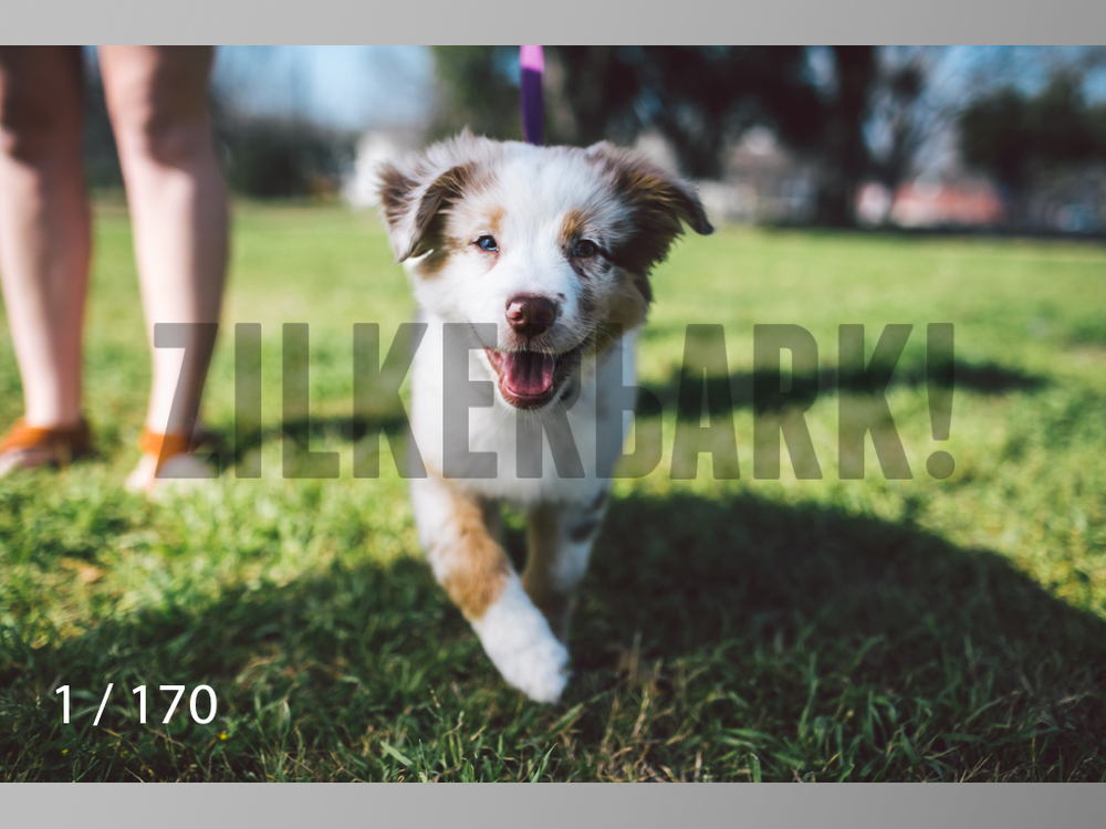 Feb Dogs-001.jpg