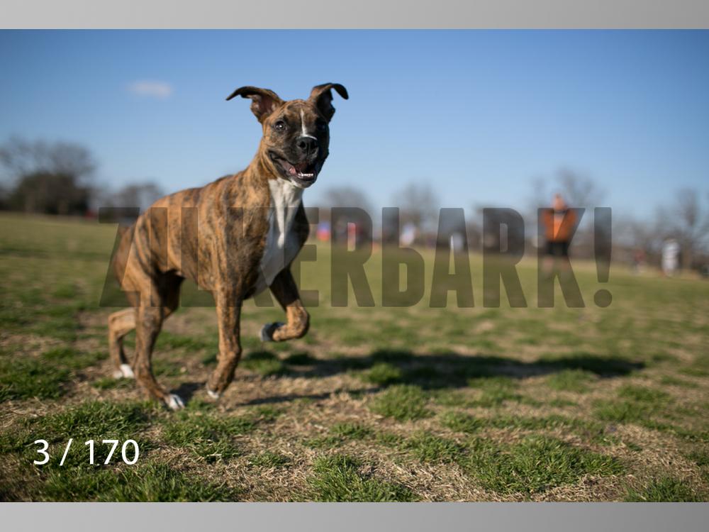 Feb Dogs-003.jpg