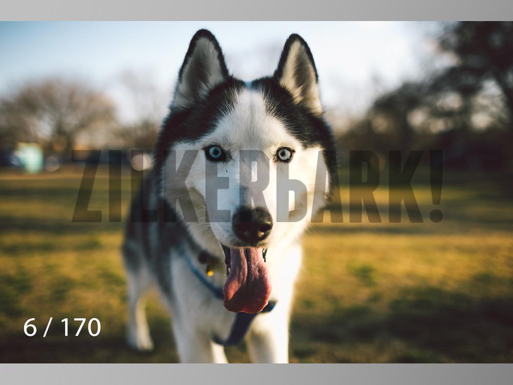 Feb Dogs-006.jpg