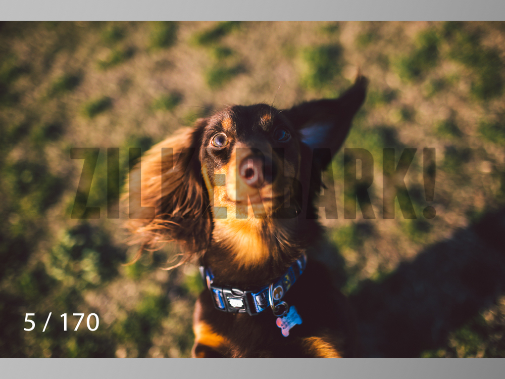 Feb Dogs-005.jpg