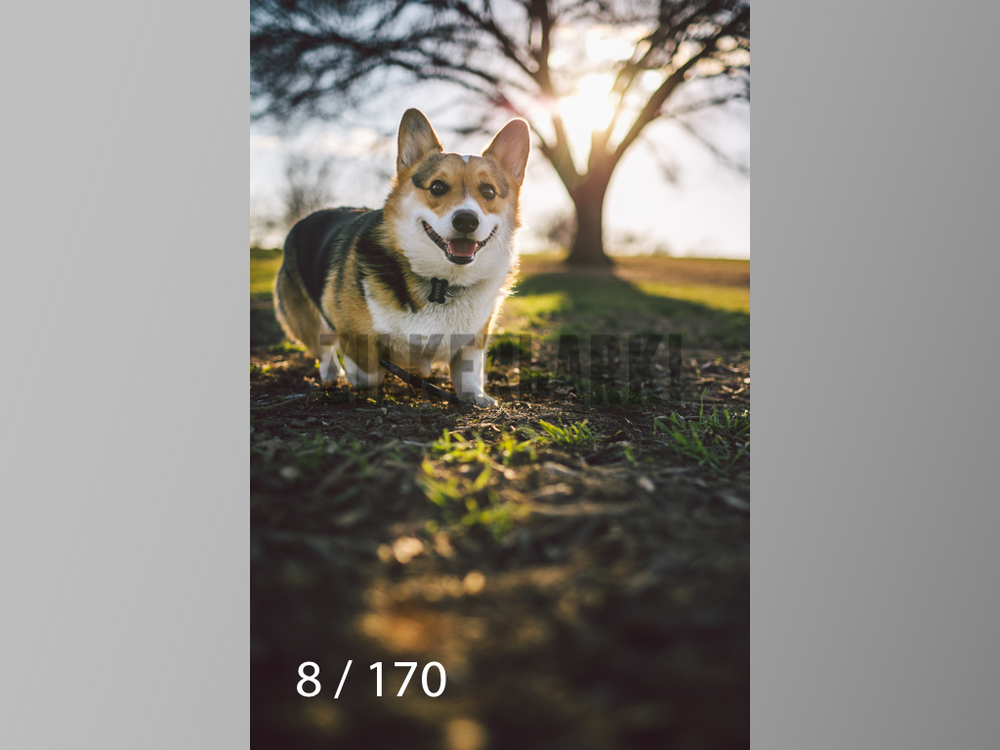 Feb Dogs-008.jpg