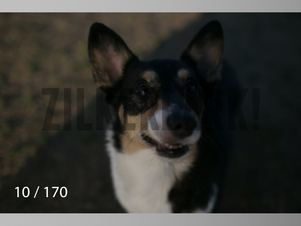 Feb Dogs-010.jpg