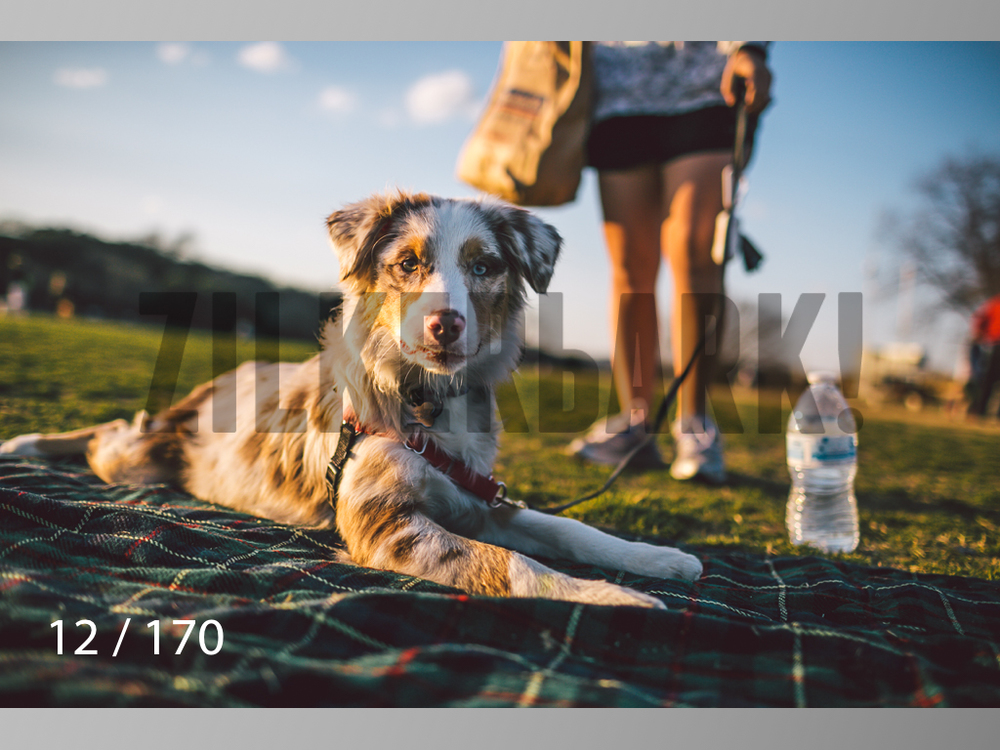 Feb Dogs-012.jpg