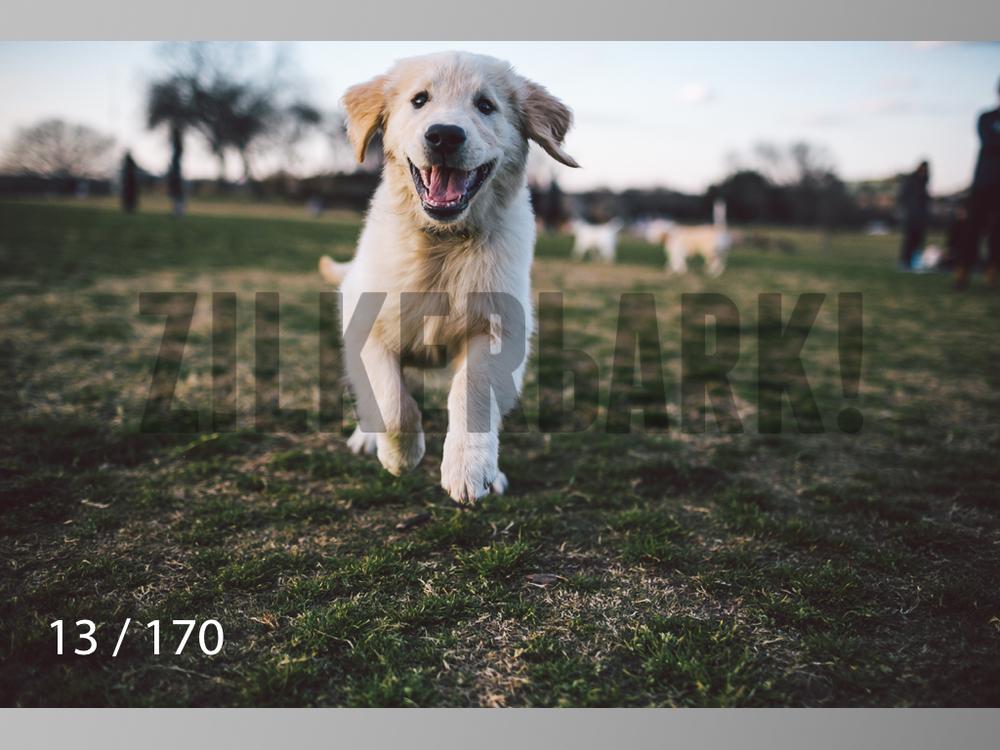 Feb Dogs-013.jpg