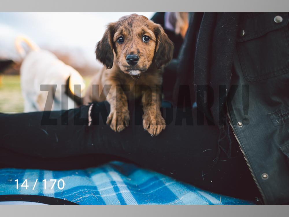 Feb Dogs-014.jpg