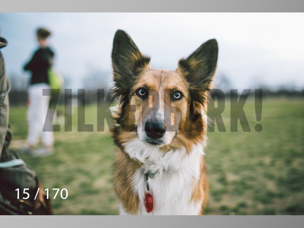 Feb Dogs-015.jpg