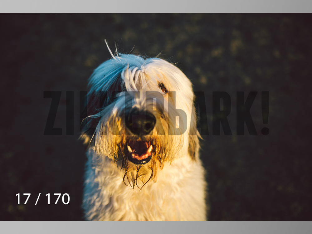 Feb Dogs-017.jpg