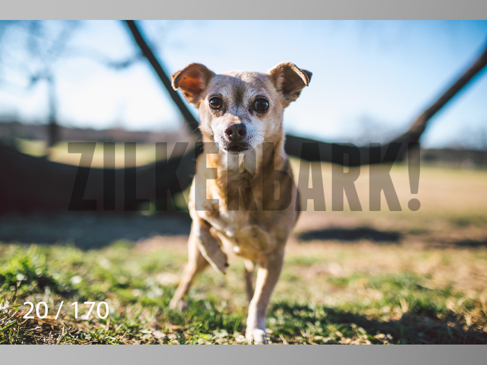 Feb Dogs-020.jpg