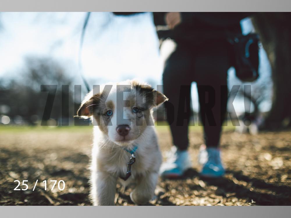 Feb Dogs-025.jpg