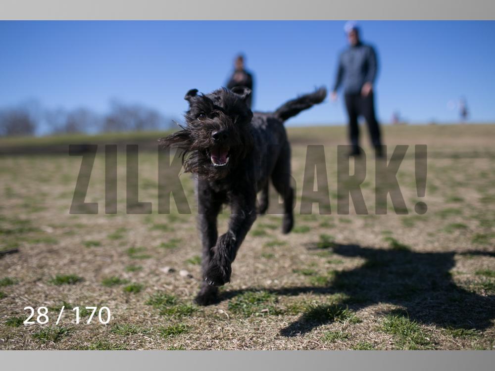 Feb Dogs-028.jpg