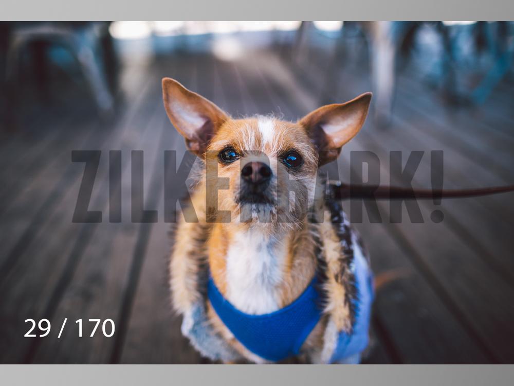 Feb Dogs-029.jpg