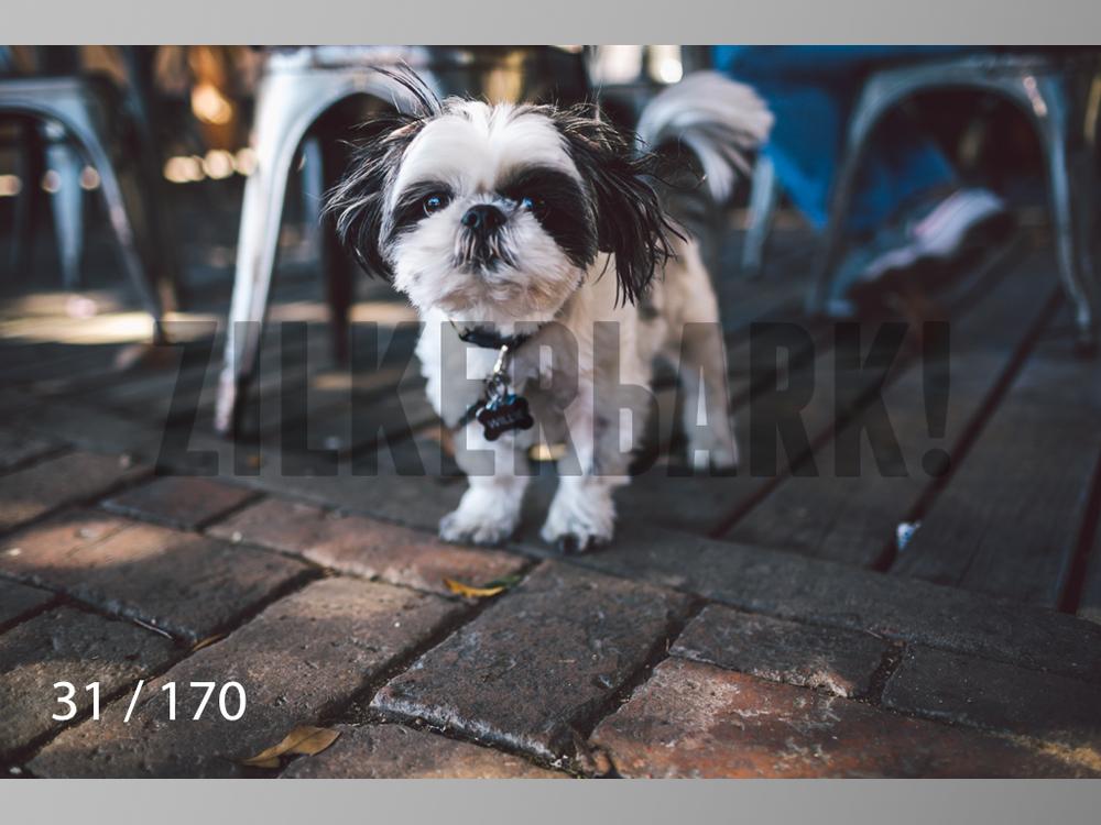 Feb Dogs-031.jpg