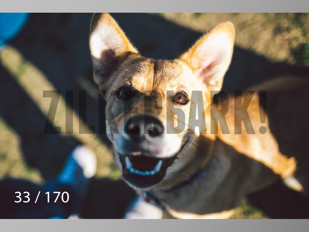 Feb Dogs-033.jpg