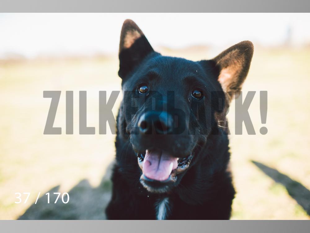 Feb Dogs-037.jpg