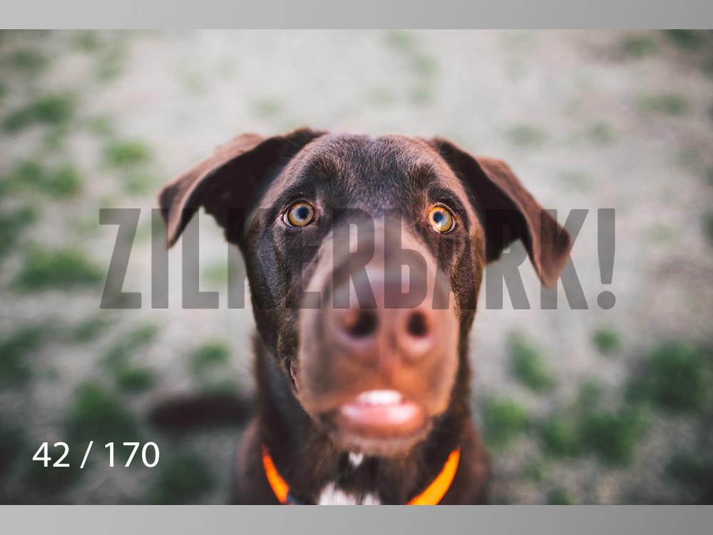Feb Dogs-042.jpg