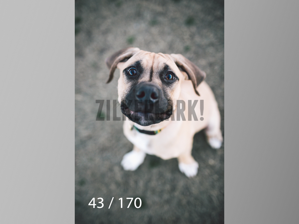 Feb Dogs-043.jpg
