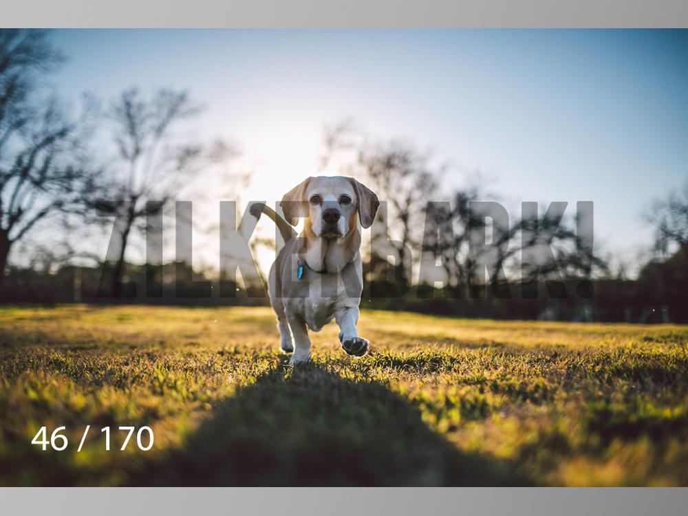 Feb Dogs-046.jpg