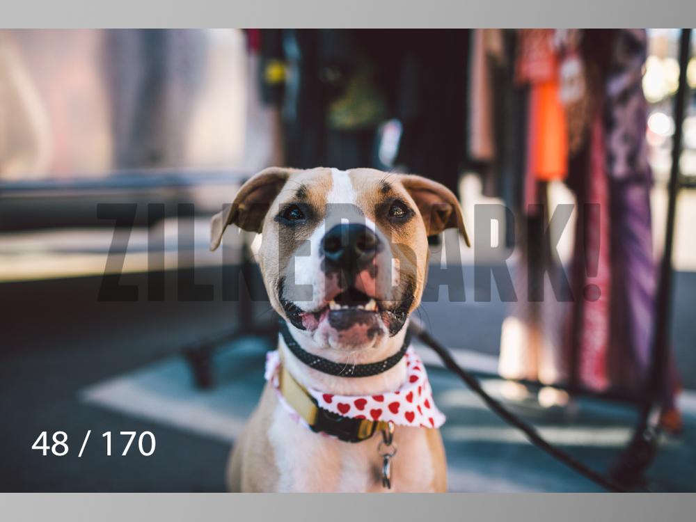 Feb Dogs-048.jpg
