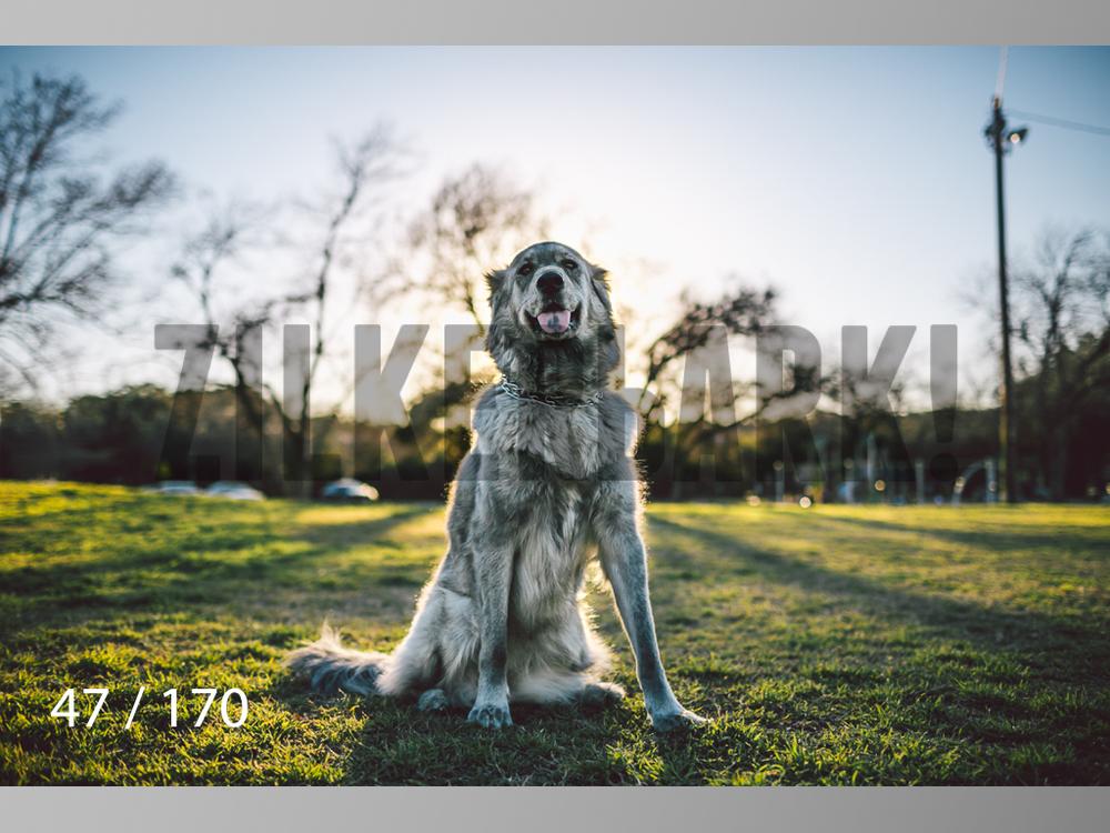 Feb Dogs-047.jpg
