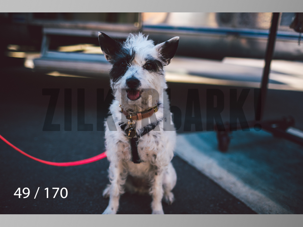 Feb Dogs-049.jpg